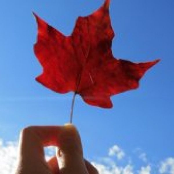 Why Study in Canada is Best Option for Students?
